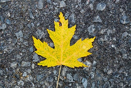 yellow leaf laying on pavement